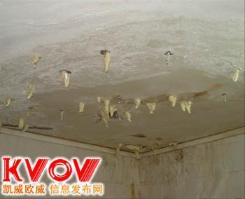 园区车坊专业提供屋顶、防腐补漏、屋顶补漏