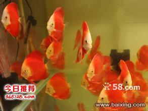 专业的志晶水族鱼缸护理团队为您提供上门服务