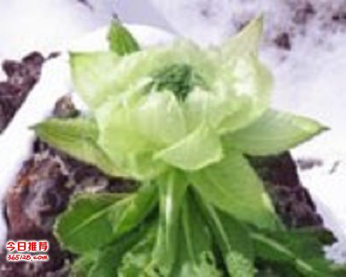 特色西藏特产零食_西藏特产零食_特色西藏特产美食