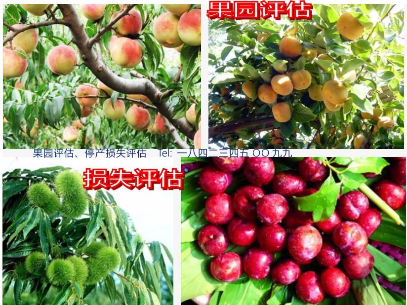 四川绵阳果园评估果树评估葡萄评估果园经济收益评估拆迁补偿
