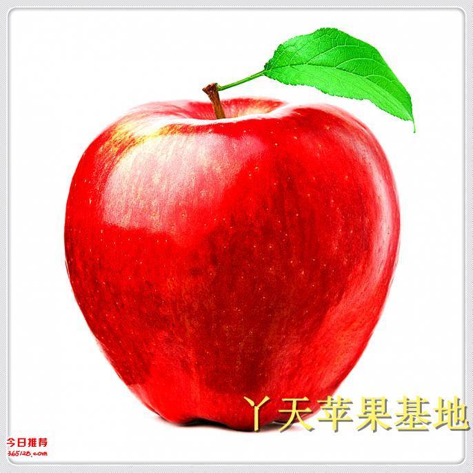 昭通苹果批发