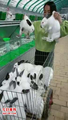 兔子养殖技术指导