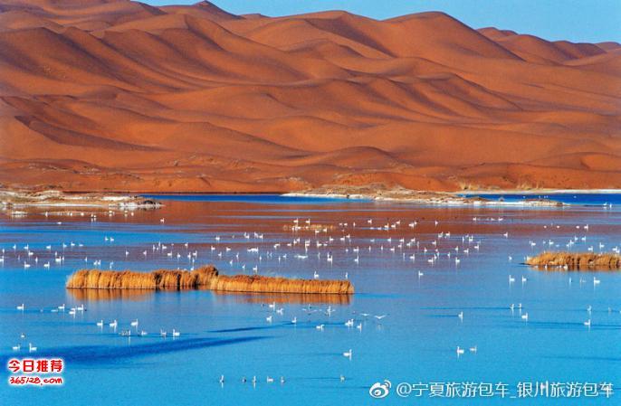 银川旅游租车至腾格里沙漠徒步穿越越野车包车旅游