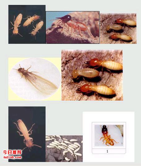 桂林灭白蚁、别墅灭白蚁、白蚁防治、灭鼠、灭蟑螂