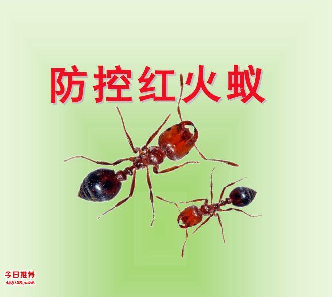 桂林赫鼎鸿红火蚁防治公司、灭红火蚁、杀红蚂蚁