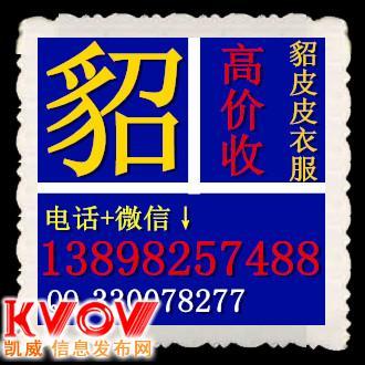 秦皇岛回收貂皮|电话13898257488|秦皇岛貂皮回收|QQ330078277