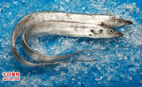 象山縣進口帶魚到國內的流程和所需要注意的事項