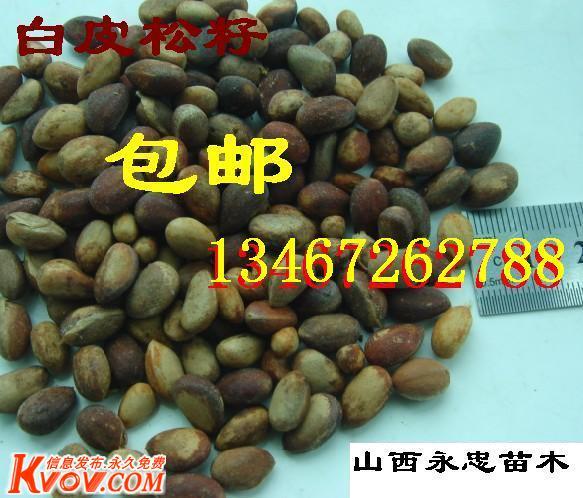 包郵寄鈣果籽、文冠籽、花椒籽、油松籽、白皮松籽