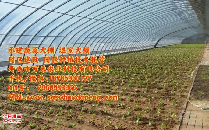 大棚园区托管-园区种植技术托管-寿光市万禾农业