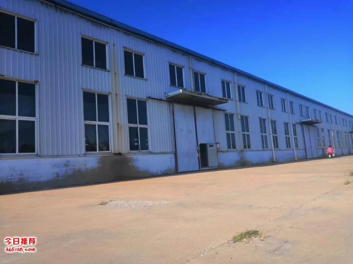 工廠處理出售一批樺木板材