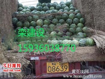 河南西瓜种植基地西瓜批发品种繁多