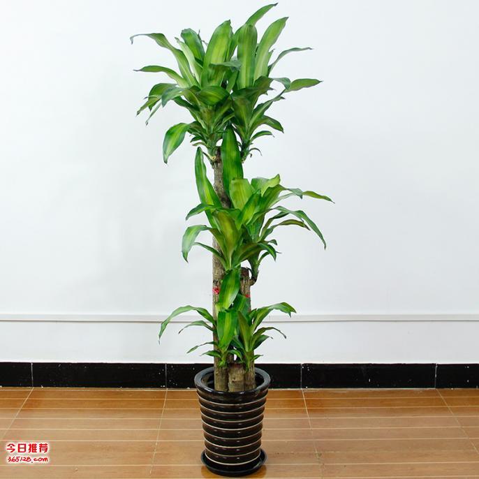 武汉绿植租摆公司绿植盆栽租赁,专注植物租摆养护服务